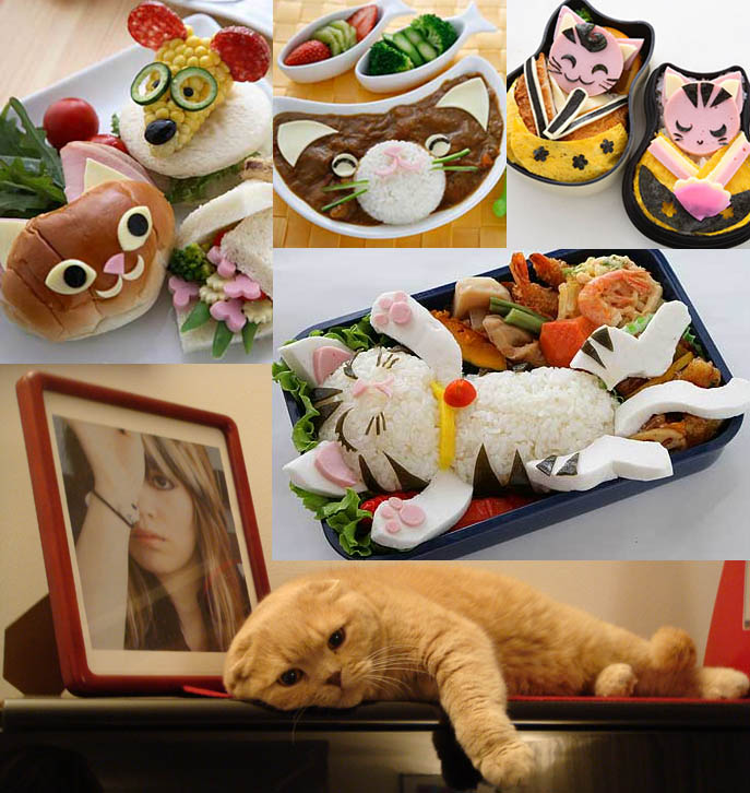 Cute kawaii kitty cat bento boxes from Japan. Scottish fold Basil Farrow.