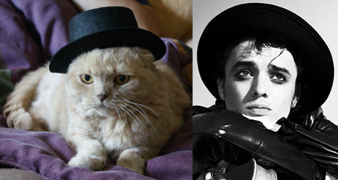 Pete Doherty hat and cat, cute kitten wearing costume and hat.